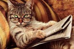 «Свои издания» как пример приватизации государства