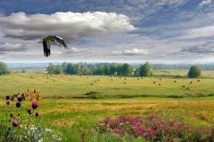 """Фотоконкурс """"Белорусы на природе: контрасты"""" (до 15 июня)"""