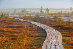 Люди – на болото! Приглашаем журналистов в путешествие 15-17 апреля