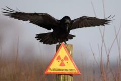 Прэс-тур у Чарнобыльскую зону